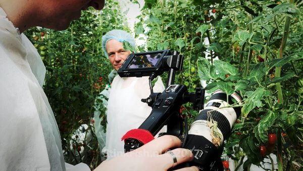 filming tomatoes